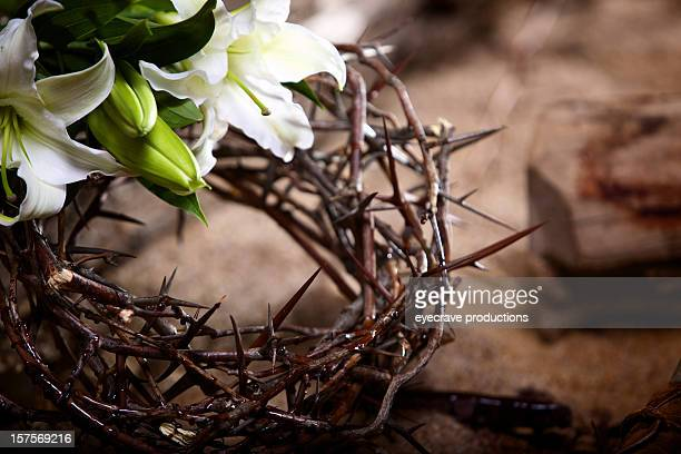 easter holiday passion lily - death and resurrection of jesus stock photos and pictures