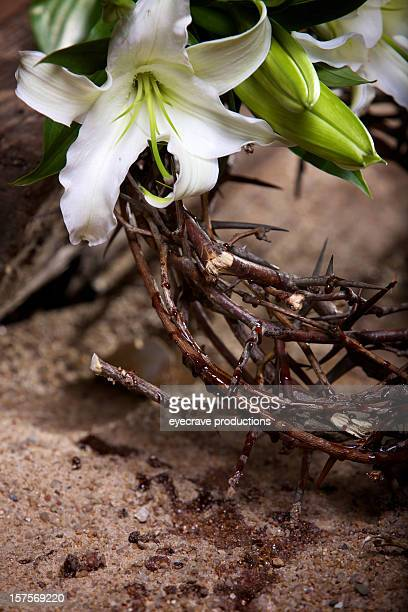 easter holiday passion lily - resurrection religion stock pictures, royalty-free photos & images
