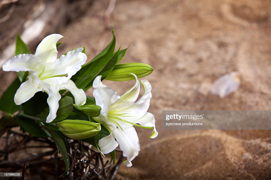 Easter Holiday passion lily : Stock Photo