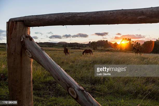 easter island - horse easter stock pictures, royalty-free photos & images