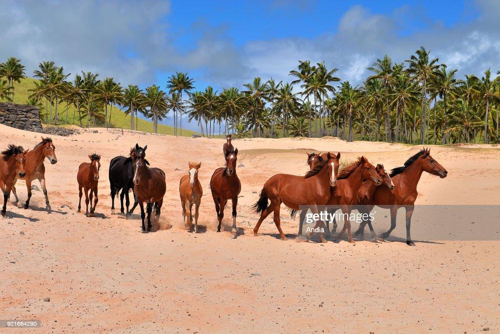 Horses running at the beach. : News Photo