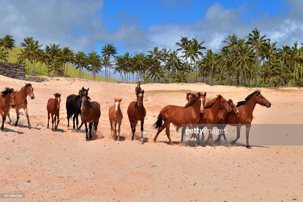 herd of horses running on a beach. Horses in the wild.
