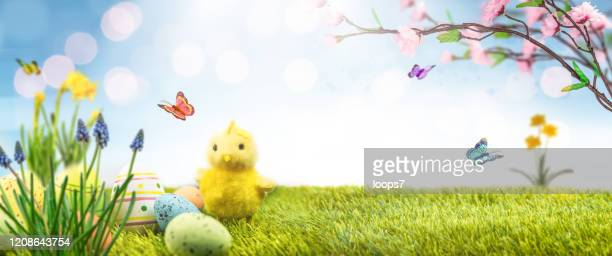 easter landscape - italian easter stock pictures, royalty-free photos & images