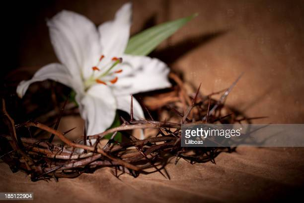 Easter Lily and A Crown of Thorns