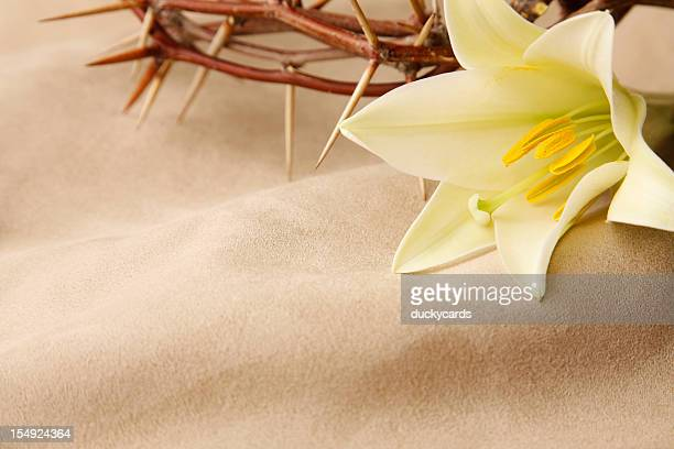 easter lily and crown of thorns - good friday stock pictures, royalty-free photos & images