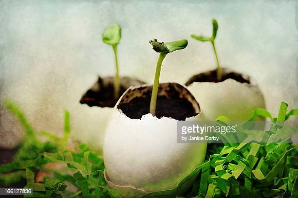 easter offerings - bean sprout stock pictures, royalty-free photos & images