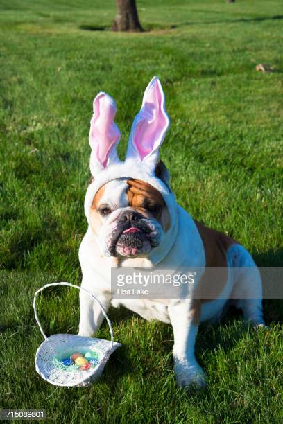 easter pets - dog easter stock pictures, royalty-free photos & images