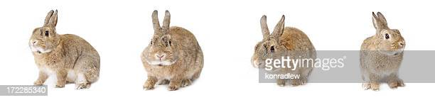 Easter rabbit isolated