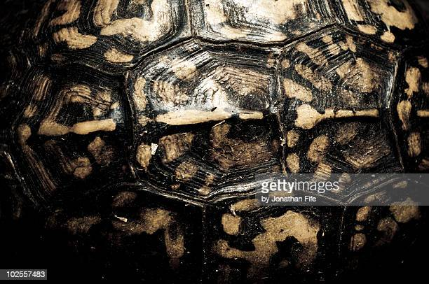 eastern box turtle shell - box turtle stock pictures, royalty-free photos & images