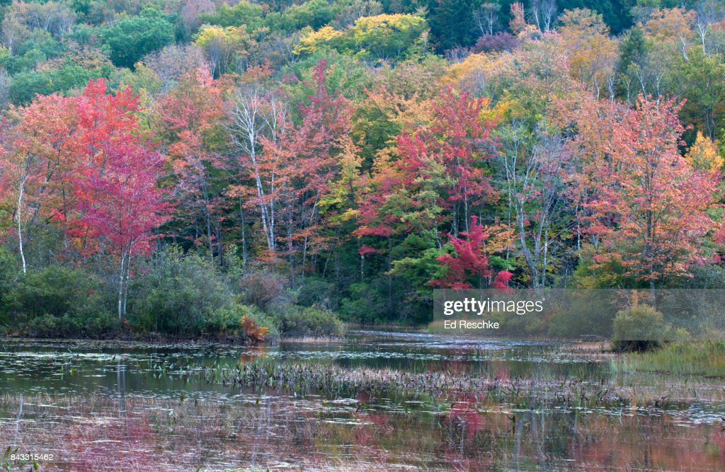 Eastern Decisuous Forest, Autumn, Northern New Hampshire Lake : Stock Photo