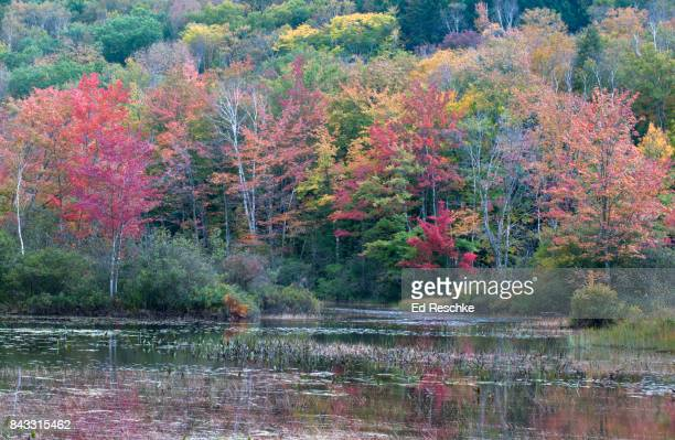 Eastern Decisuous Forest, Autumn, Northern New Hampshire Lake