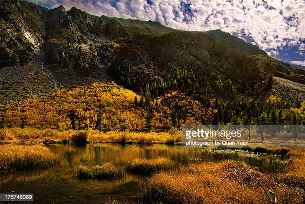 eastern sierra fall color - yuan quan stock pictures, royalty-free photos & images