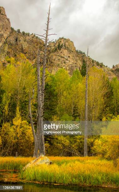 eastern sierra in autumn - highlywood stock pictures, royalty-free photos & images