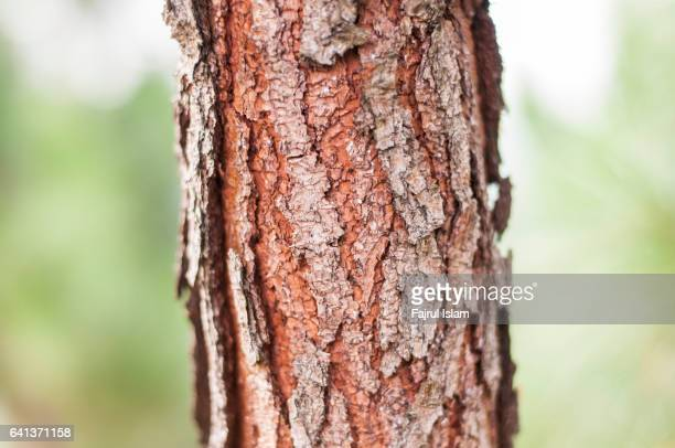 eastern white pine bark closeup - eastern white pine stock pictures, royalty-free photos & images