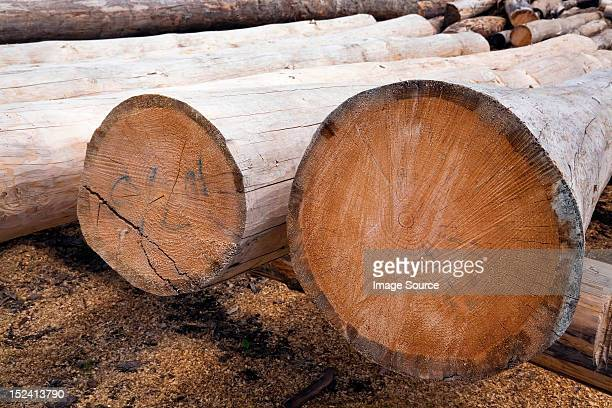eastern white pine tree logs - eastern white pine stock pictures, royalty-free photos & images