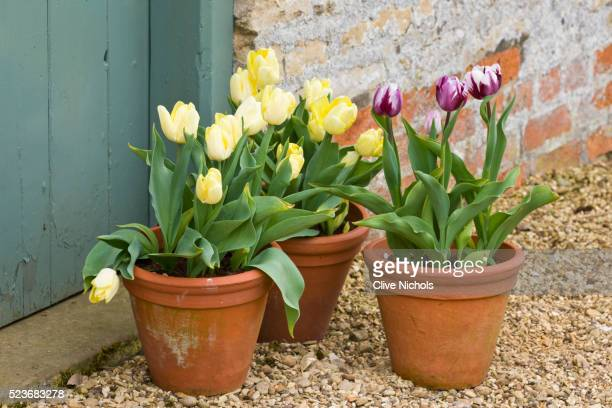 easton walled garden - plant pot stock pictures, royalty-free photos & images