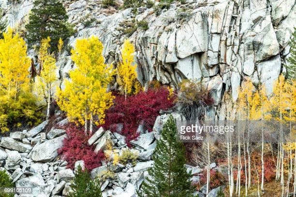 Eastside Fall Colors in Bishop Creek