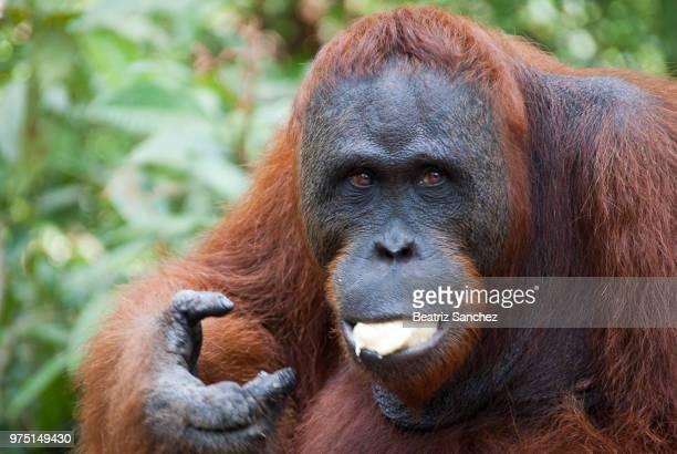Eating banana