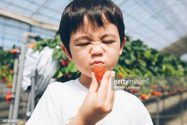 eating strawberries - peter lourenco imagens e fotografias de stock