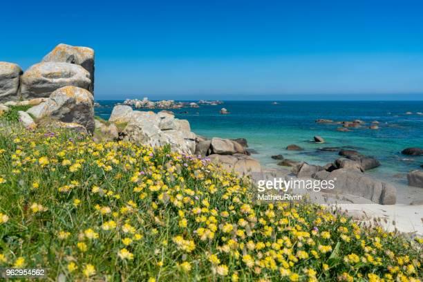eaux turquoises de bretagne et plage du finistère nord - bretagne photos et images de collection