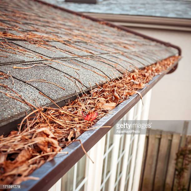 Eavestrough clogged with leaves - V