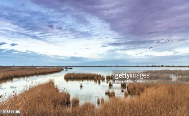 ebro delta wetlands - ebro river stock photos and pictures