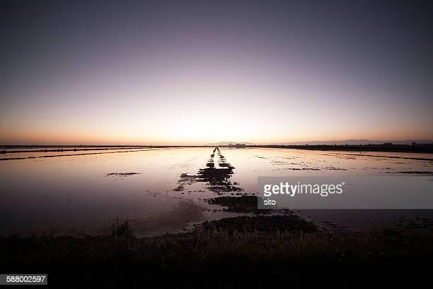 ebro's river delta - delta del ebro fotografías e imágenes de stock