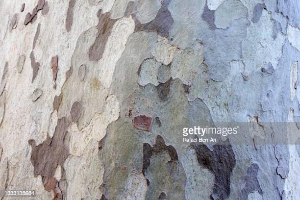 ecaliptus tree trunk cover in a military looking camouflage background - rafael ben ari stock-fotos und bilder
