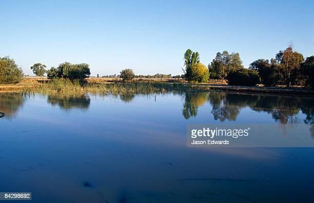 Breeding ponds for harvesting Freshwater Leeches aka Striped Leeches.