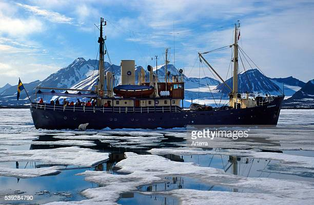 Eco tourists photographing curious Polar bear from ship, Svalbard / Spitsbergen, Norway.