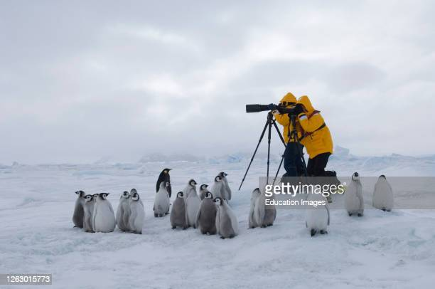 Eco tourists photographing Emperor Penguin, Aptenodytes forsteri, chicks on sea ice at Snow Hill Island colony in Weddell Sea, Antarctica.