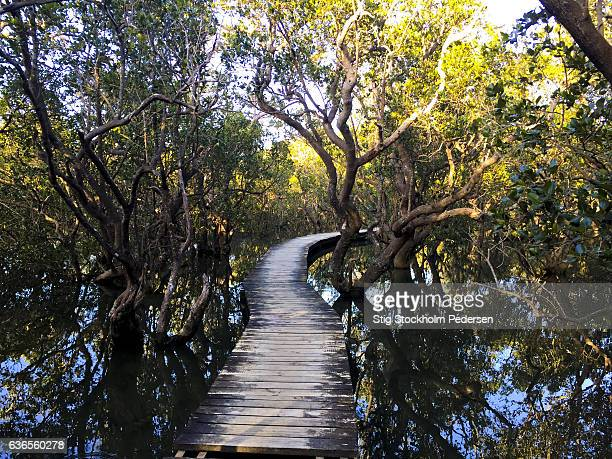 eco tours at daintree national park - unesco stock pictures, royalty-free photos & images
