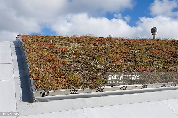 ecological architecture of living roof which provides natural insulation - succulent stock pictures, royalty-free photos & images