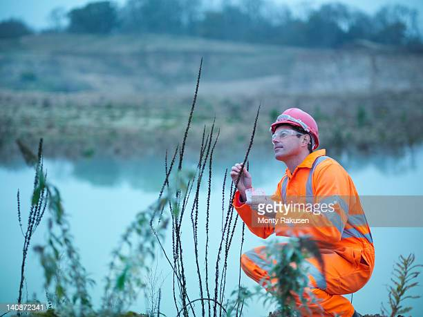 ecologist inspecting flowers and plants next to water on quarry site - ecologist stock pictures, royalty-free photos & images