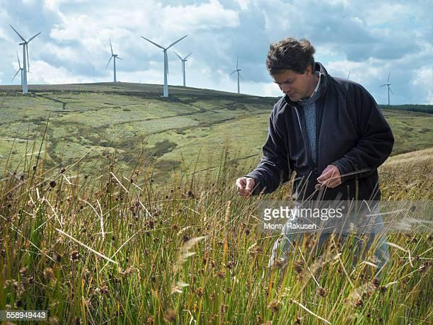 Ecologist inspecting grass on windfarm