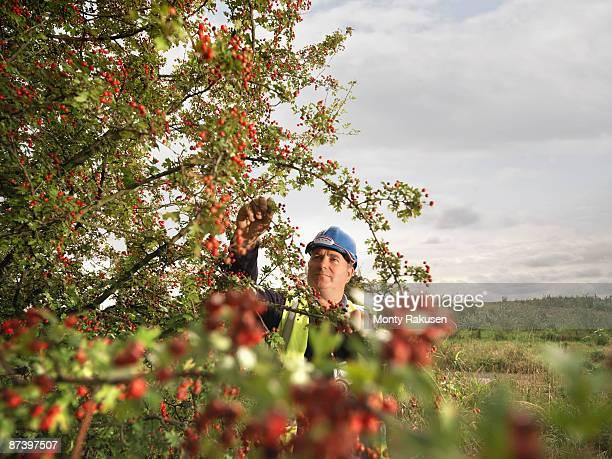 Ecologist Inspecting Tree