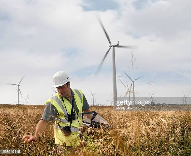ecologist inspecting wildlife on windfarm - ecologist stock pictures, royalty-free photos & images