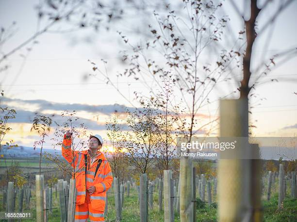 Ecologist inspecting young trees at site of surface coal mine restoration