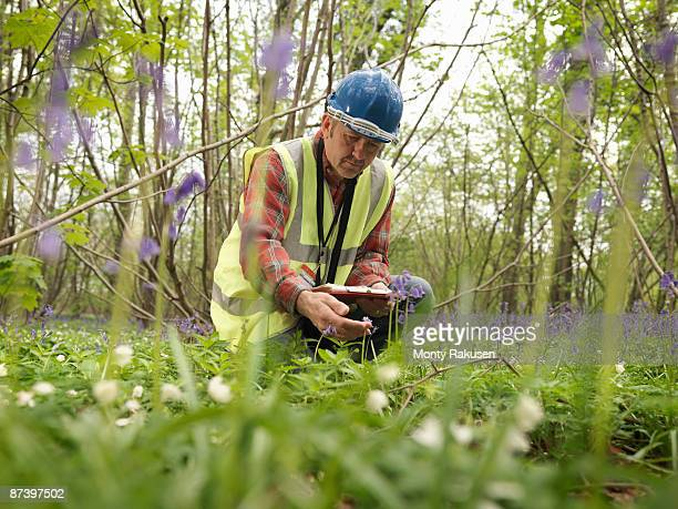 ecologist with bluebells - ecologist stock pictures, royalty-free photos & images