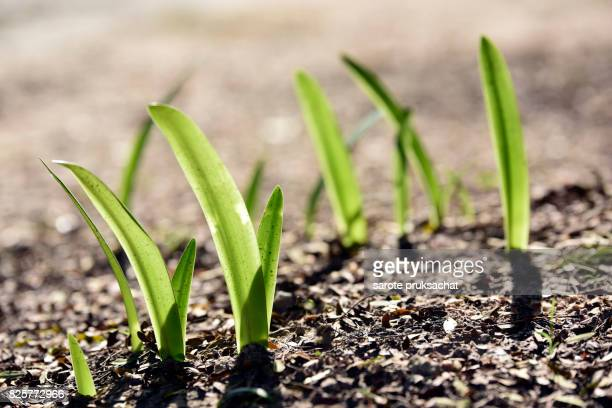 Ecology concept . Green sapling , young plant showing ecology growth or nature concept
