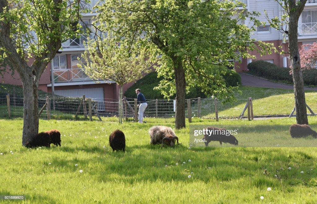 Eco-pasture. : News Photo