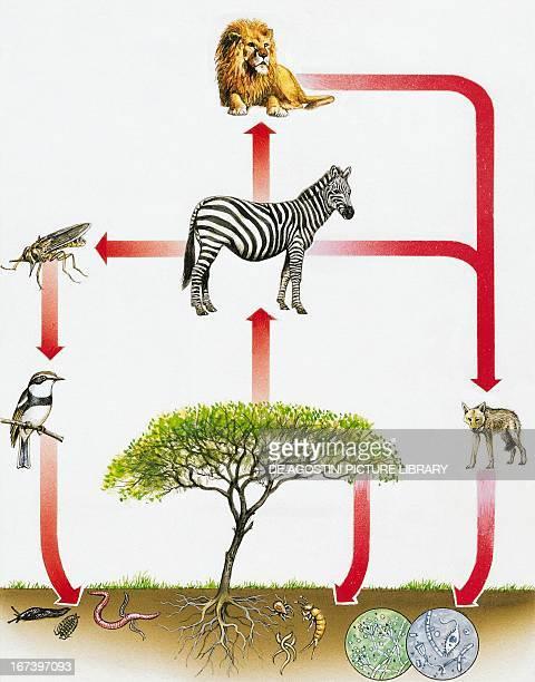Ecosystem diagram drawing