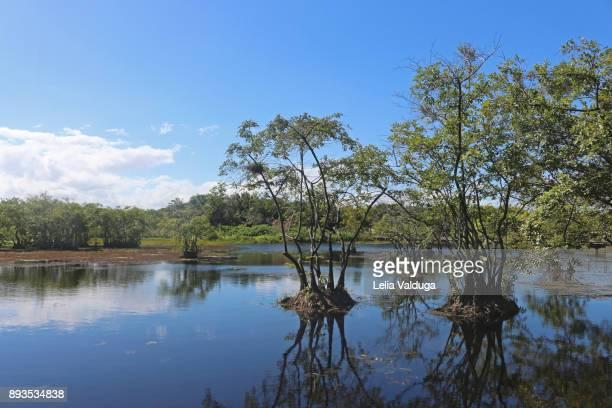 Ecosystem of Timeantube Lagoon - Praia do Forte - BA -