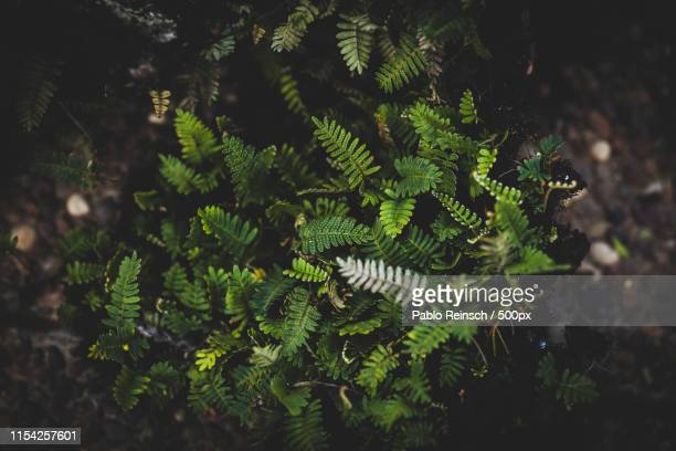 ecosystem - posadas stock pictures, royalty-free photos & images
