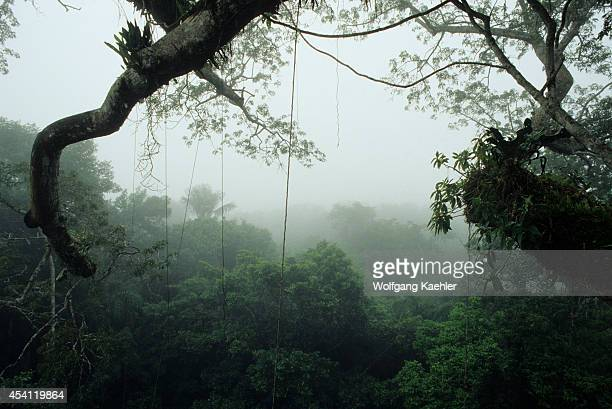 Ecuador Amazon Basin Near Coca Rain Forest Upper Canopy Mist Rising After Rain