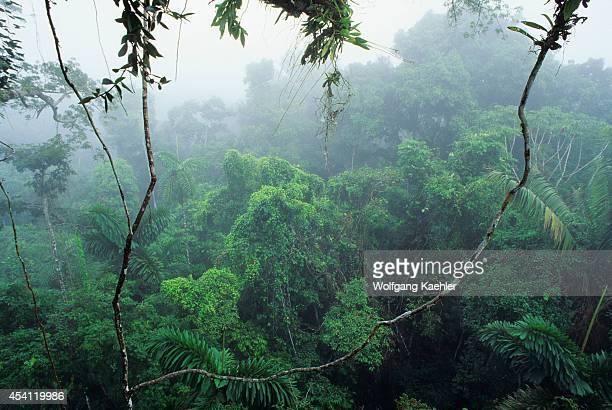 Ecuador Amazon Basin Near Coca Rain Forest Upper Canopy Mist Rising After Rain