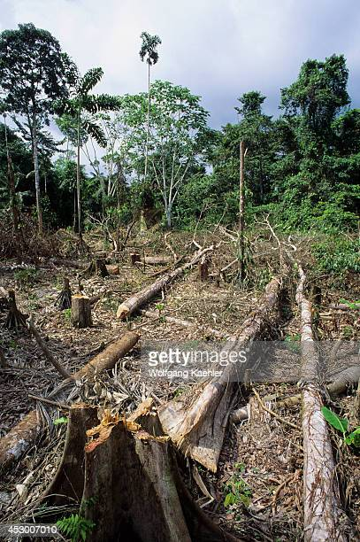Ecuador Amazon Basin Near Coca Rain Forestindillana River Clearcut For Farming