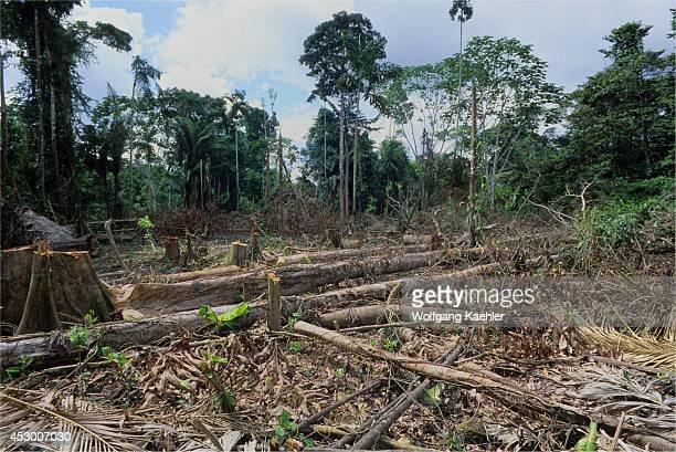 Ecuador Amazon Basin Near Coca Rain Forestindillana River Clearcut For Farming