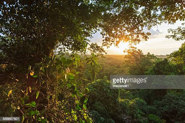 ecuador, amazon river region, treetops in rain forest - ecuador stock pictures, royalty-free photos & images