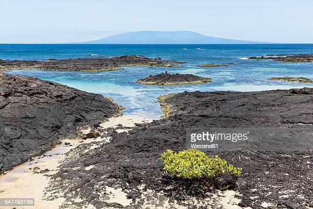 Ecuador, Galapagos Islands, Isabela, coast with Galapagos sea lions
